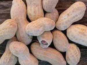 arašídy (ilustrační foto)