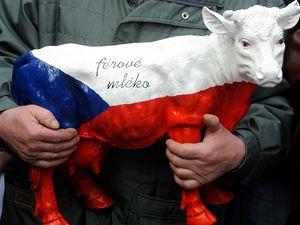 Zem�d�lci protestuj�c� proti dota�n� politice EU a n�zk�m v�kupn�m cen�m ml�ka dorazili 12. b�ezna na V�clavsk� n�m�st� v Praze.