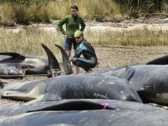 Velryby na souši
