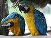 Papou�ek, ilustra�ní foto | na serveru Lidovky.cz | aktu�ln� zpr�vy