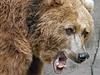 Rozzu�ený medv�d (ilustra�ní foto) | na serveru Lidovky.cz | aktu�ln� zpr�vy