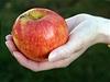 Jablko (ilustra�n� foto).