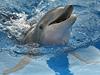 Delfín (ilutra�ní foto)   na serveru Lidovky.cz   aktu�ln� zpr�vy