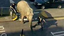 Slona chytili po n�kolika minutách. | na serveru Lidovky.cz | aktu�ln� zpr�vy
