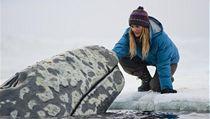 Film Máme rádi velryby zahájí ozvěny Febiofestu