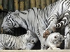 Tyg�í rodinka v liberecké zoo. | na serveru Lidovky.cz | aktu�ln� zpr�vy
