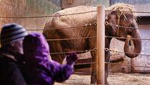 Náv�t�vníci pra�ské zoo se p�i�li podívat na slonice Tamaru a Janitu. | na serveru Lidovky.cz | aktu�ln� zpr�vy