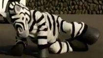 P�i simulaci poslou�il místo uprchlého zví�ete mu� navle�ený do kostýmu zebry. | na serveru Lidovky.cz | aktu�ln� zpr�vy