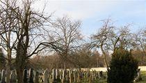 A také pom�rn� velká �idovská obec, po ní� tu z�stala p�ed pár lety opravená synagoga a h�bitov | na serveru Lidovky.cz | aktu�ln� zpr�vy