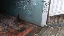 Podchod pod magistrálou na nábřeží Kapitána Jaroše, Praha 7