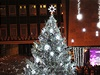 ÚSTÍ NA LABEM - Na Lidickém náměstí je strom oděn do bílé barvy sněhu.