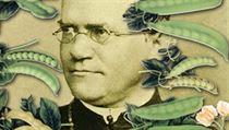 Brn�nský opat Gregor Johann Mendel formuloval takzvané t�i Mendelovy zákony d�di�nosti, a je proto ozna�ován za �otce genetiky�. | na serveru Lidovky.cz | aktu�ln� zpr�vy