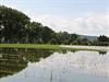 Na konci června se Pražané konečně dočkají otevření přírodního biotopu v Radotíně.