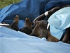 Oběti útoku somálských islamistů na keňské turistické středisko Mpeketoni.