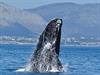Lod� se speciální licencí se mohou p�iblí�it k velrybám opravdu velmi blízko. | na serveru Lidovky.cz | aktu�ln� zpr�vy