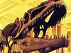 Kostra dinosaura - ilustra�ní foto | na serveru Lidovky.cz | aktu�ln� zpr�vy