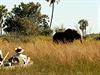 Delta Okavango. Safari z vody má úpln� jiné kouzlo, ne� safari z auta.   na serveru Lidovky.cz   aktu�ln� zpr�vy