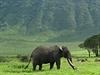 Sta�í samci se stahují do kráteru Ngorongoro kv�li ��avnaté strav�. | na serveru Lidovky.cz | aktu�ln� zpr�vy