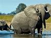 Sloni jsou velkým lákadlem. Delta Okavango. | na serveru Lidovky.cz | aktu�ln� zpr�vy