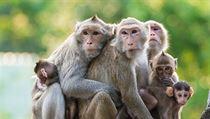 V�dci pracuj�c� na nad�jn�m l�ku proti ebole zn�m�m jako ZMapp zaznamenali...