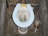 Polosuchý záchod - zastávka Branná | na serveru Lidovky.cz | aktu�ln� zpr�vy