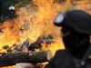 Dvorská zoo spálila 21. zá�í p�es 50 kilogram� rohoviny nosoro�c� | na serveru Lidovky.cz | aktu�ln� zpr�vy
