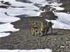 Nepál omezil záchranné práce na místech, která tento týden zasáhla silná...
