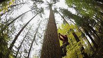 Podle m��ení z 22. �íjna m��í z�ejm� nejvy��í strom v �esku 64,05 metru.... | na serveru Lidovky.cz | aktu�ln� zpr�vy