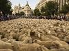 Ovce ve �pan�lské metropoli Madridu | na serveru Lidovky.cz | aktu�ln� zpr�vy