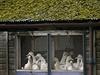 Naffertonské kachny čeká pro podezření z ptačí chřipky vybití.