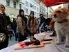 Aktivisté rovněž připomínají, že tradice vánočního kapra je poměrně novým...
