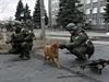 Voják si hraje se psem