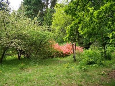 Alex - arboretum - jaro