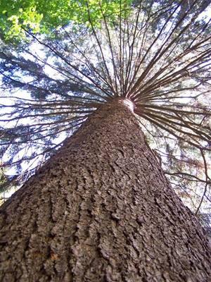 Alex - arboretum - pohled na strom