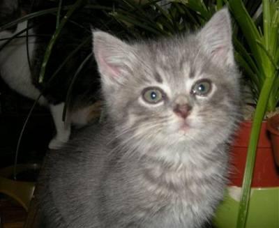 Beda - kočky v nouzi - Daneček