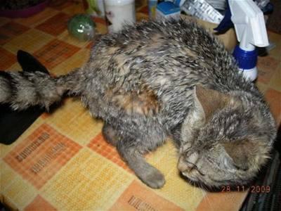 Beda - kočky v nouzi - Maluška