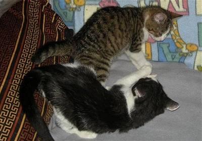 Beda - kočky v nouzi - hra