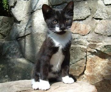 Bytomská - Malá coby kotě