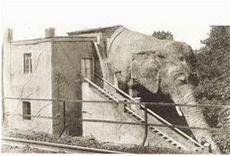 slon Sedlec
