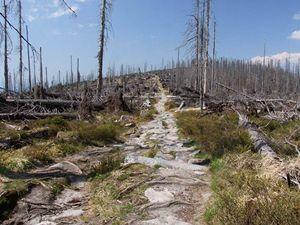 Bursíkem založený prales 2