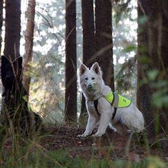 Berri a Ari čekají v lese, až na ně přijde řada
