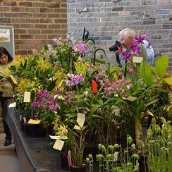 ��st v�stavy orchidej�