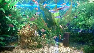 Společenské akvárium