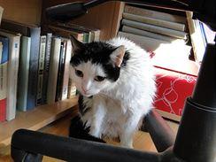Nakrknutá mokrá kočka