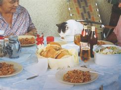 Kotě večeří s návštěvou