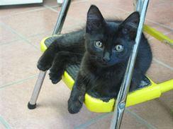 Židli si oblíbila i malá Rusty