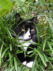 Odpočinek v chladné trávě