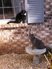 Zátiší s kočkami