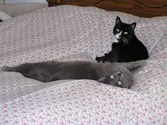 Kočky svorně spolu