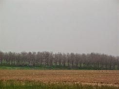 Mír lesů 4